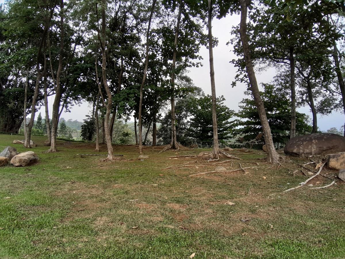 pohon wide angle